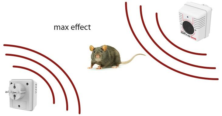 Несколько одновременно действующих источников УЗ сигнала оказывают на грызунов максимальный отпугивающий эффект