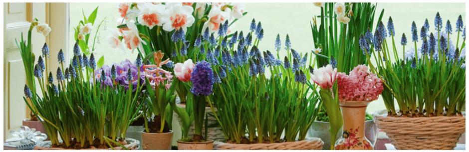 Новинка: Сад на окне