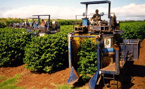 Механический сбор урожая кофе