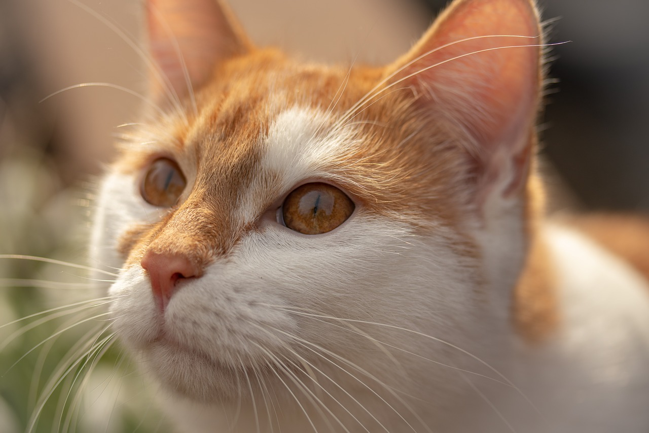 Катя-котёнок