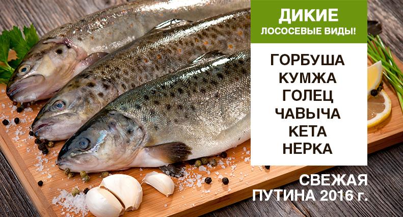 Icefish_web_banner_5__X1-2_1_.jpg