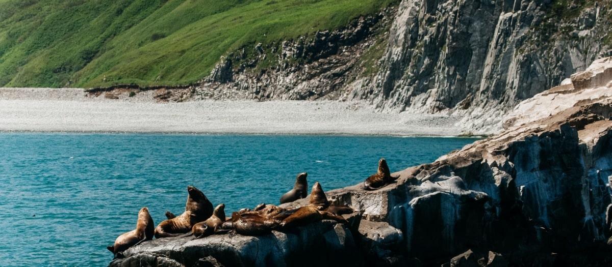 Тюленьи лежбища у острова Старичков