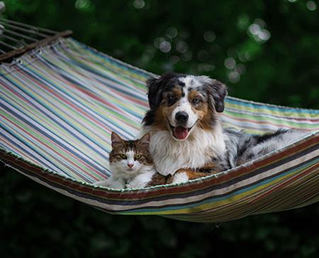 Кот с собакой в гамаке