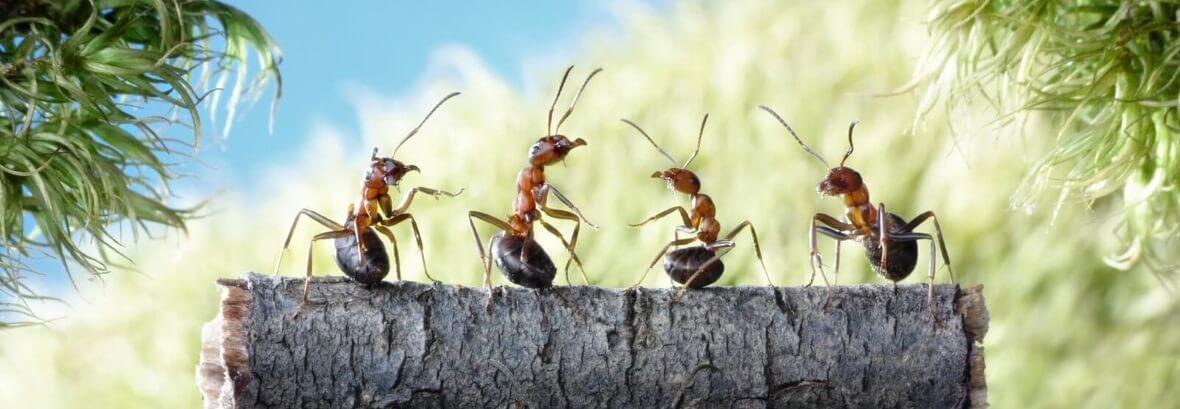Отправка по России с гарантией на муравьев