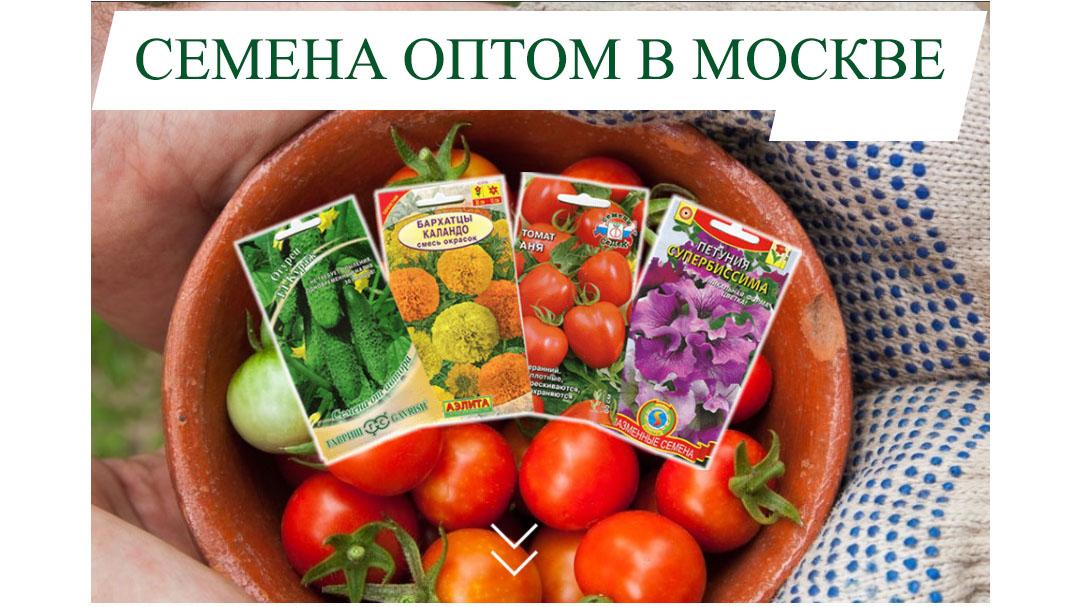 Семена оптом в Москве по цене производителя!