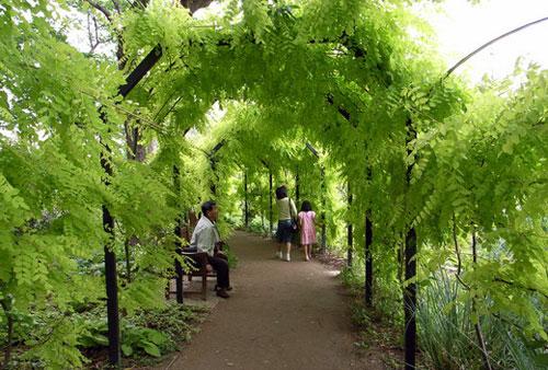 Вертикальное озеленение - красивее не бывает