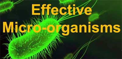 Эффективные микроорганизмы в почве