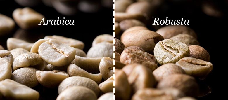 Что выбрать: арабика или робуста?