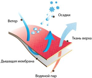 membrana_1.jpg