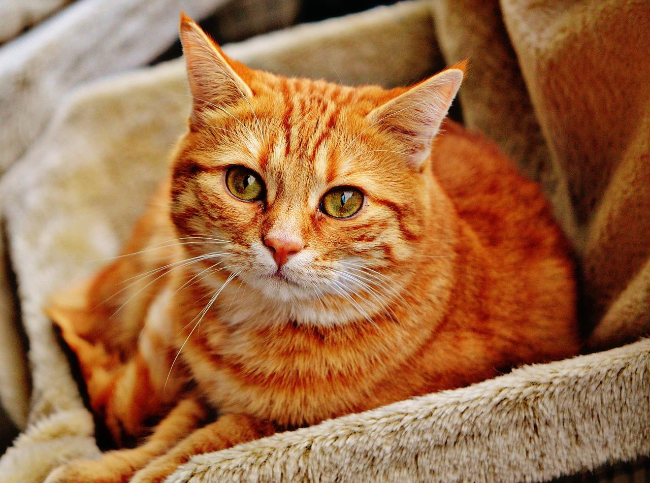 Теплый коврик для кошек