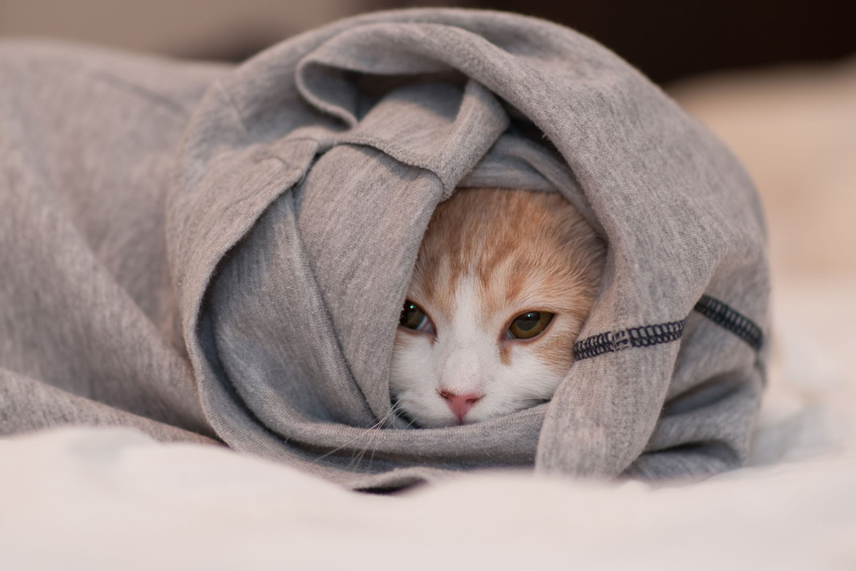 Cat-Hiding-In-T-Shirt-2880x1920.jpg