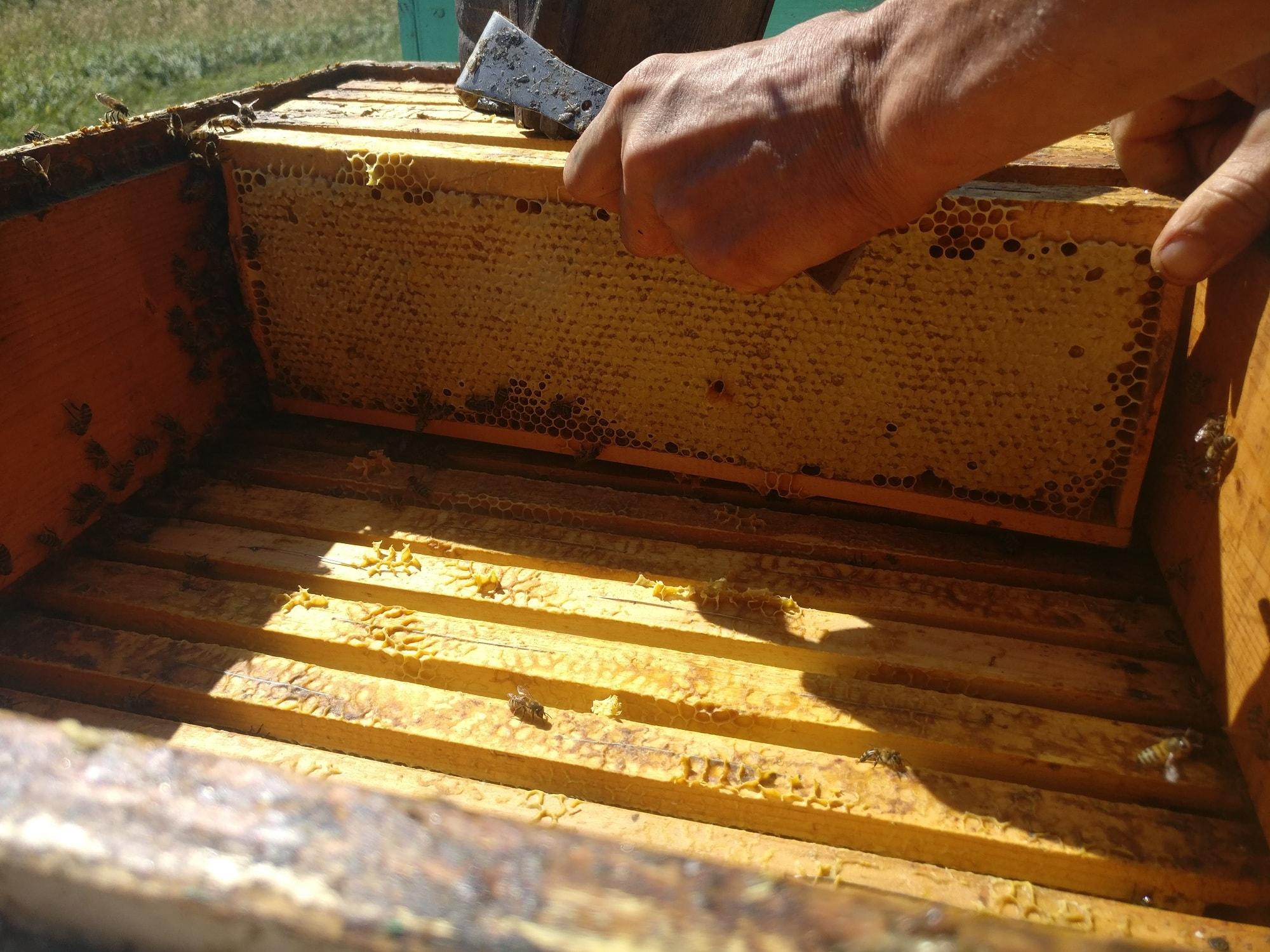 сбор меда с улея