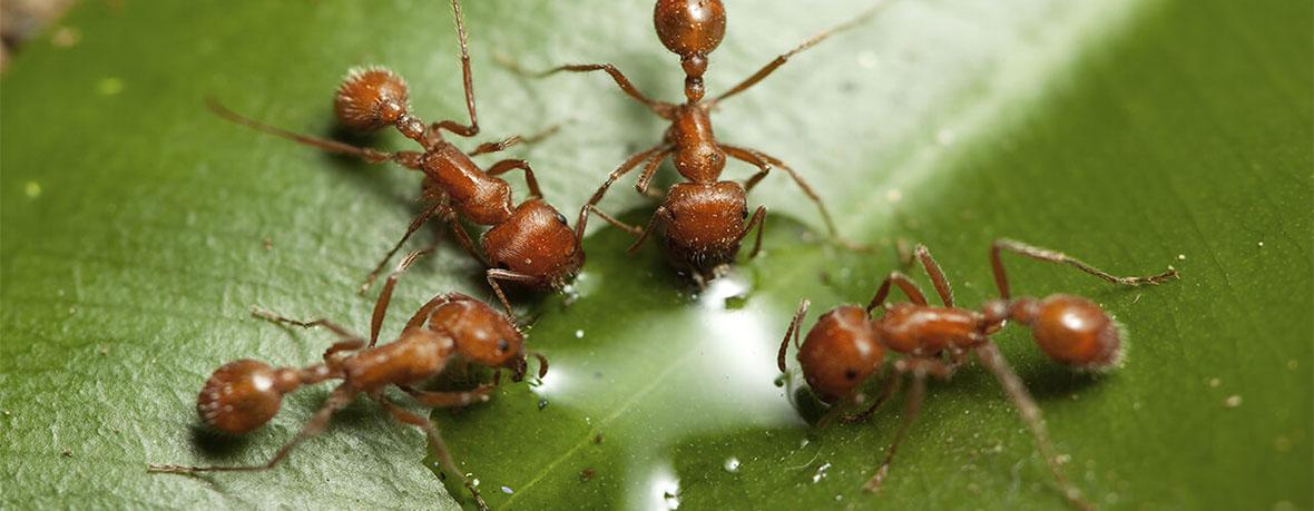 Наблюдение за размеренной муравьиной жизнью обладает хорошим антистрессовым эффектом.