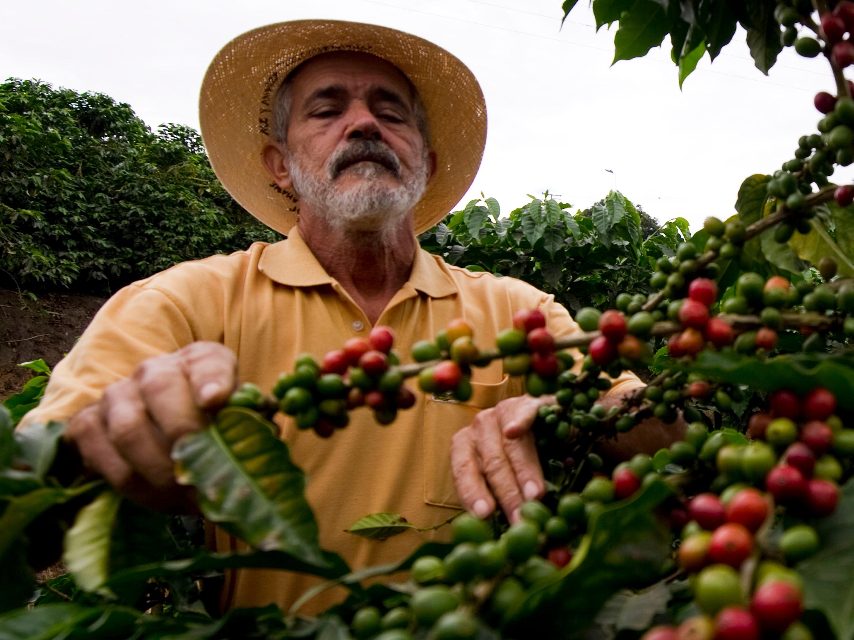Производство кофе в колумбии