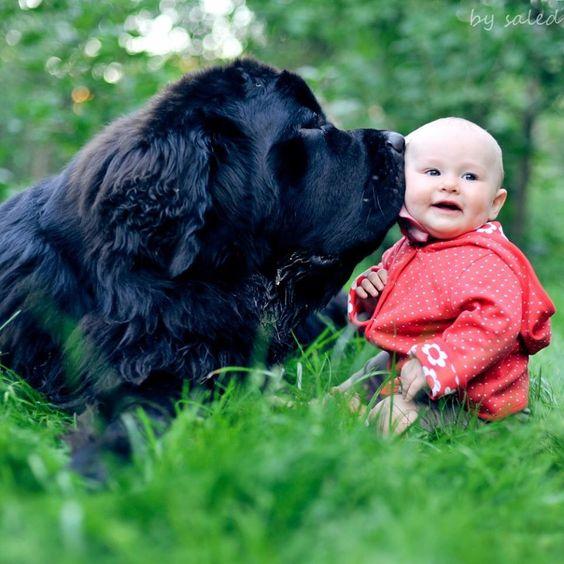 Ньюфаундленд и ребенок