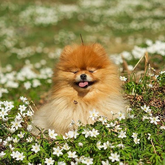 собаки весной