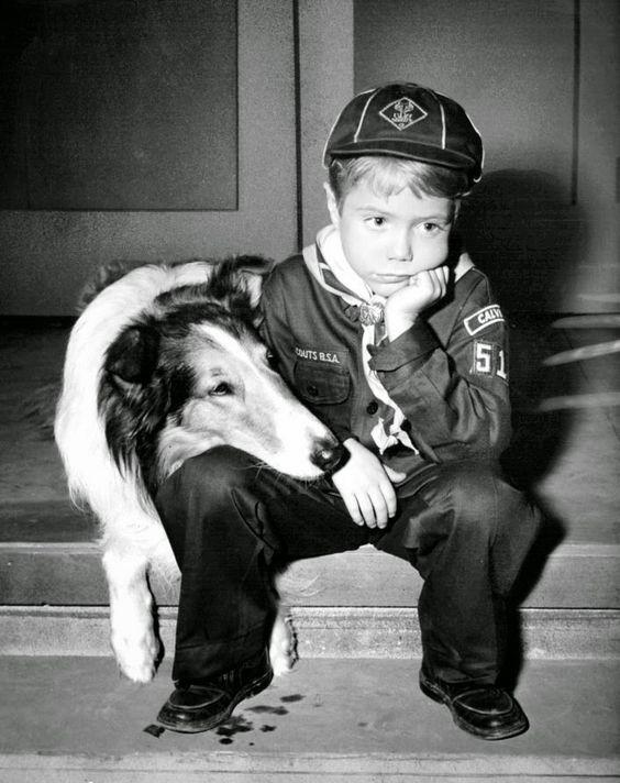 Колли - собака для ребенка
