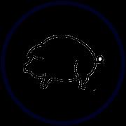 Свежая свинина в интернет-магазине