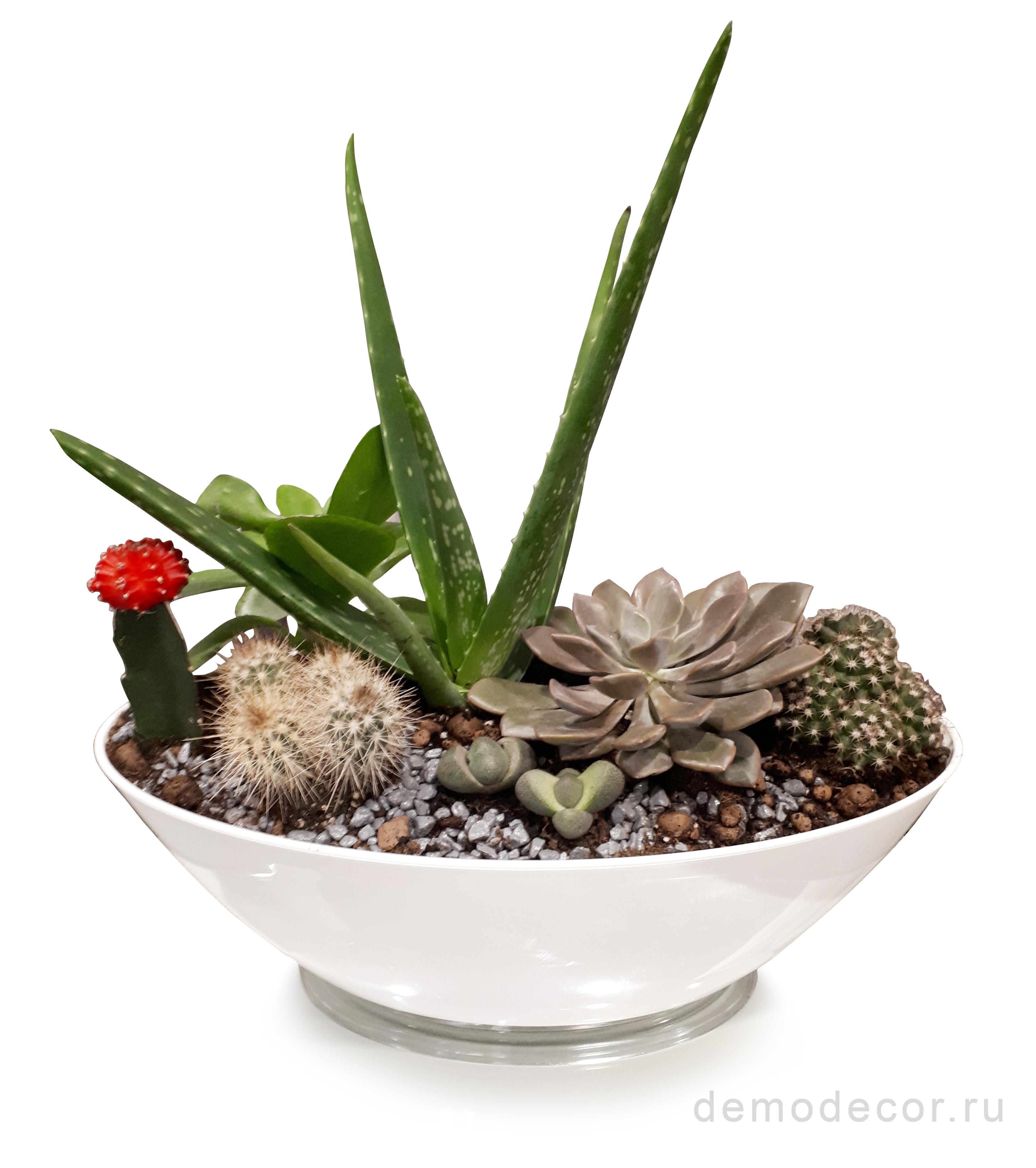 композиции из комнатных растений, композиции из суккулентов