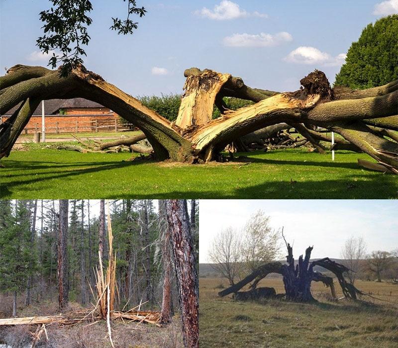 Последствия ударов молнии в дерево