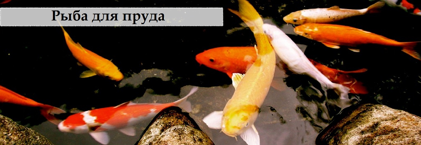 Рыба для пруда