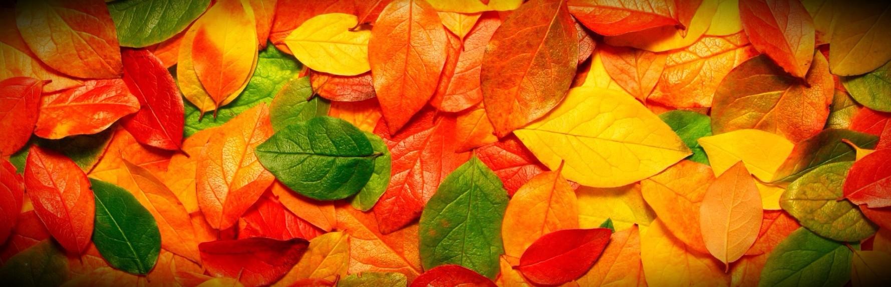 Осенний MUST HAVE!