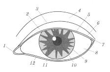 макияж глаз - схема глаза