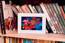 Готовая работа папертоль Бабочка на гербере - оформление в рамке.