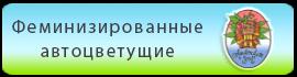 Купить в Украине феминизированные автоцветущие семена конопли  Amsterdam Seeds