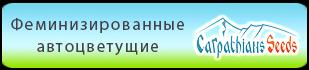 Купить в Украине феминизированные автоцветущие семена конопли Carpathians Seeds