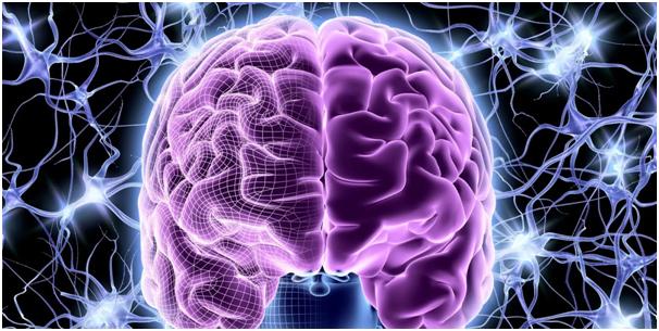 Нейропластичность и возраст