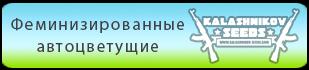 Купить феминизированные автоцветущие семена конопли Kalashnikov Seeds