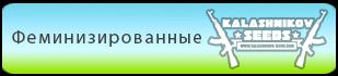 Купить феминизированные семена конопли Kalashnikov Seeds