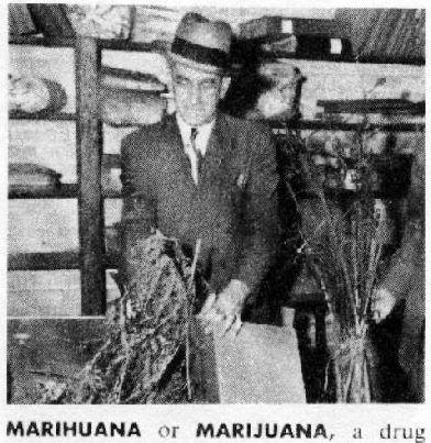 marihuana_istoriya-konopli.jpg