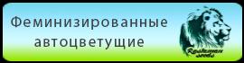Купить в Украине феминизированные автоцветущие семена конопли  Rastaman Seeds
