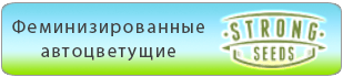 Купить в Украине феминизированные автоцветущие семена конопли Strong Seeds