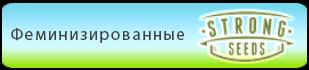 Купить в Украине феминизированные семена конопли Strong Seeds