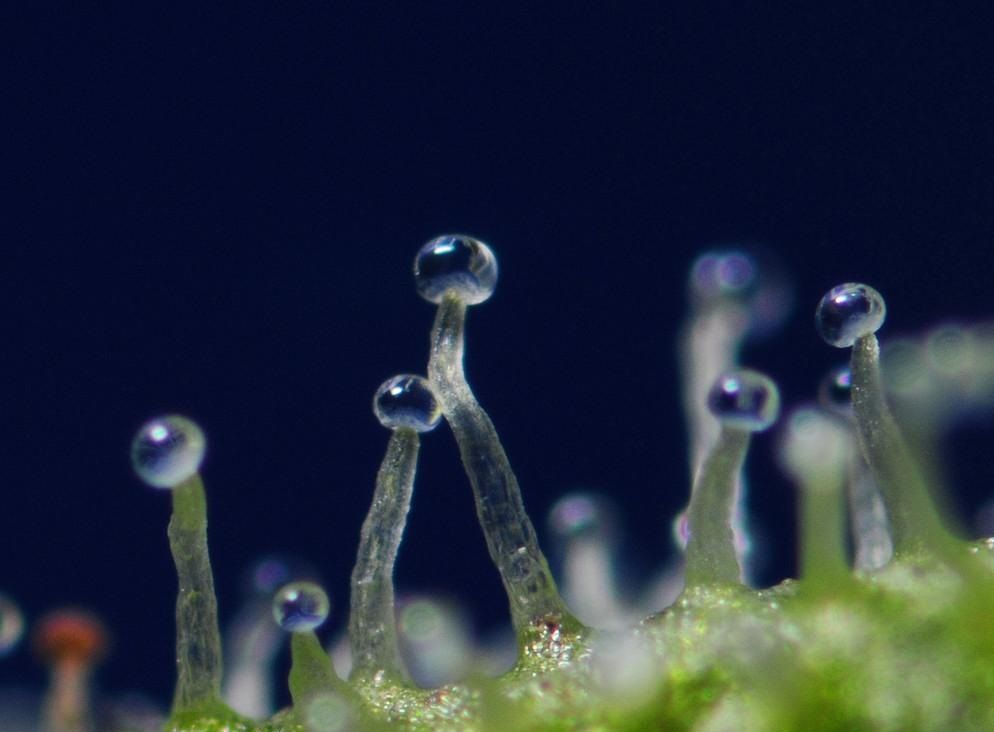 tgk-pod-mikroskopom.jpg