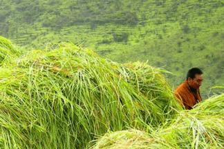 Primavera Бутан