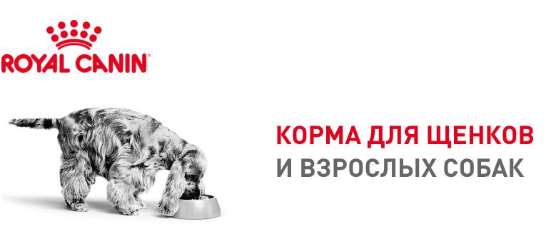 rc_brand_zone_dogs_05.jpg