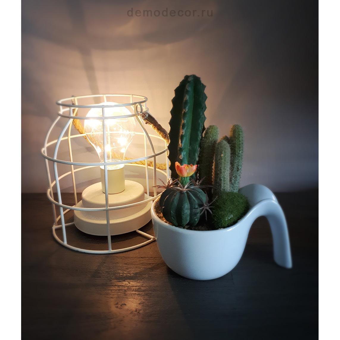 комнатные растения композиции