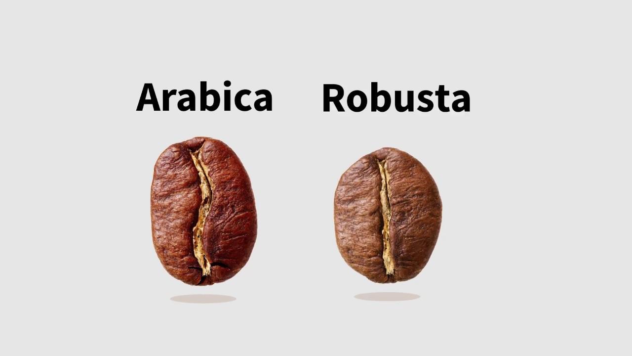 Арабика и робуста