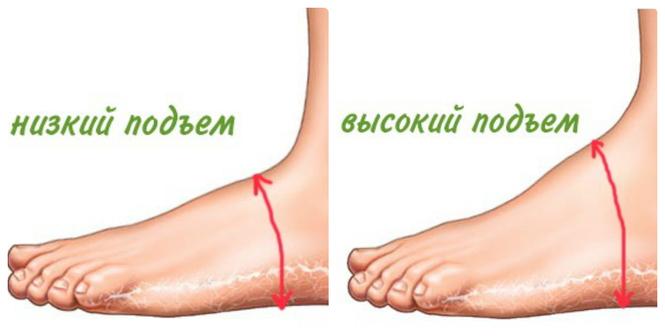 Высота ноги