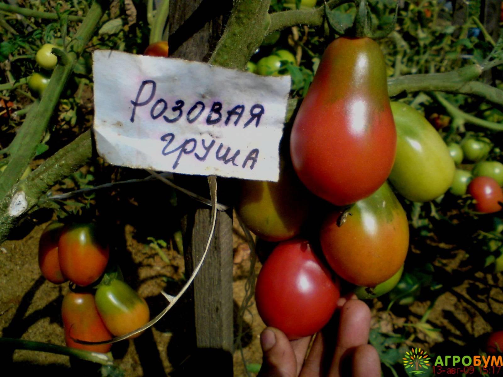 Купить семена Томат Груша розовая 0,1 г по низкой цене, доставка почтой наложенным платежом по России, курьером по Москве - интернет-магазин АгроБум