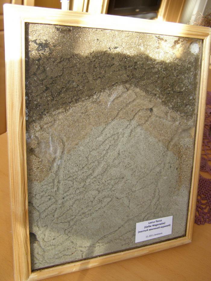 Насыпная муравьиная ферма
