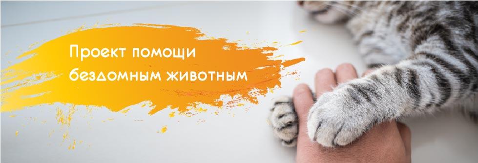 Добро пожаловать на сайт проекта Милый Кот