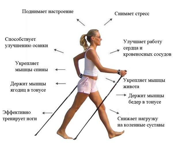 palki-dlya-hodbi-banner.jpg
