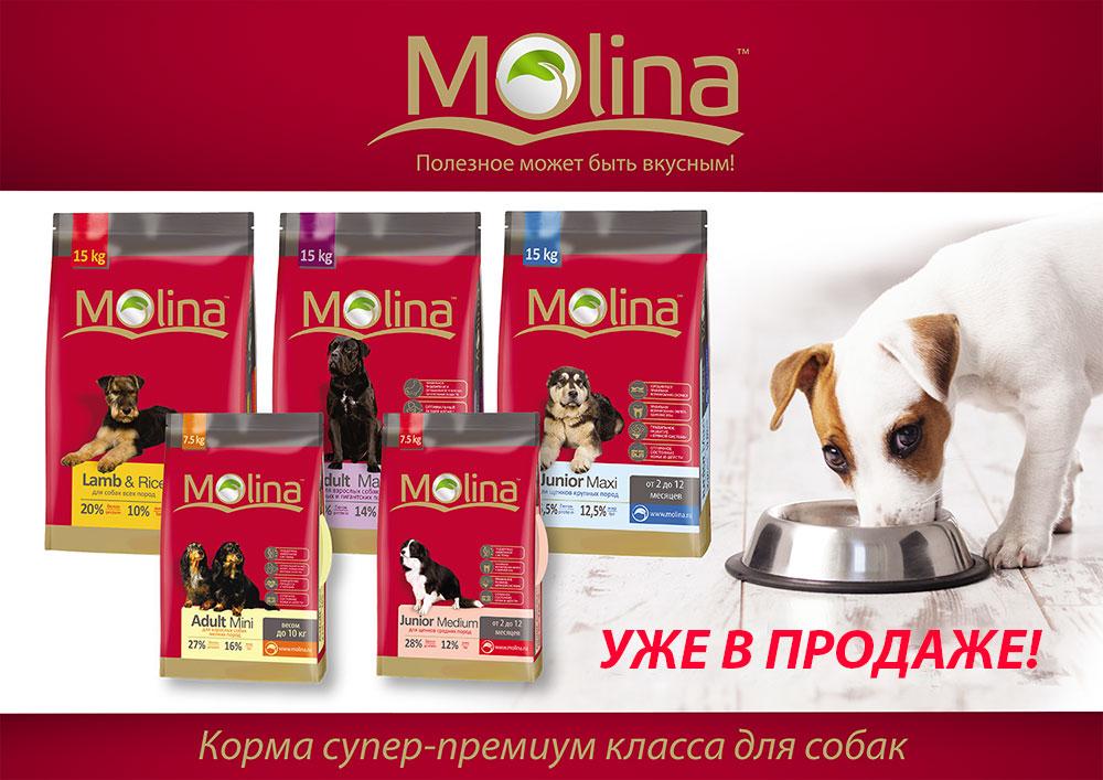 Molina-Suhoy-Novinka-August-2016.jpg