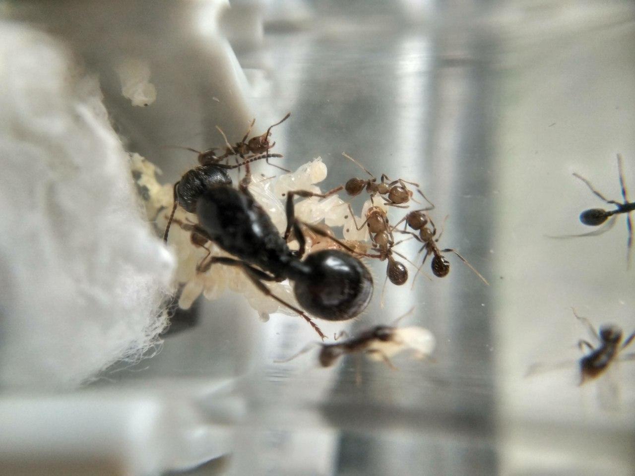 муравьи для новичка
