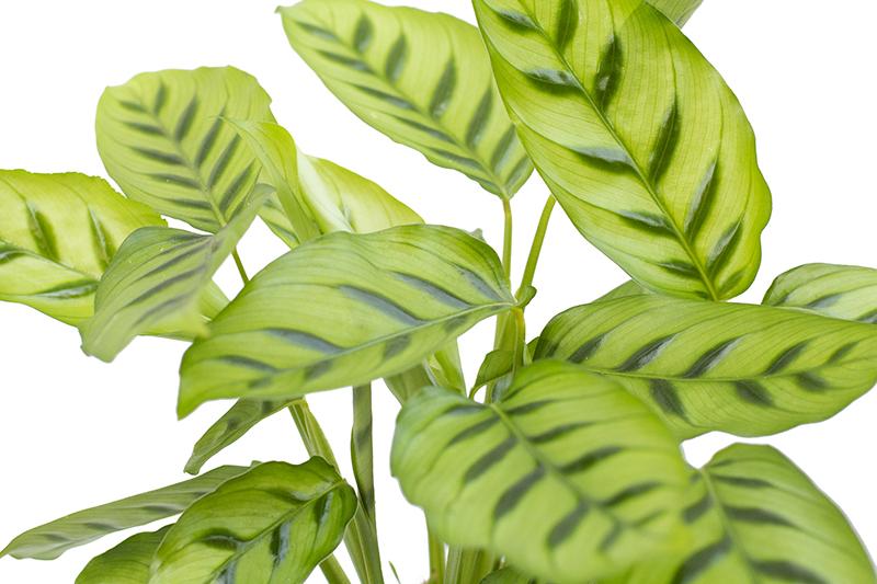 Горшечный растения